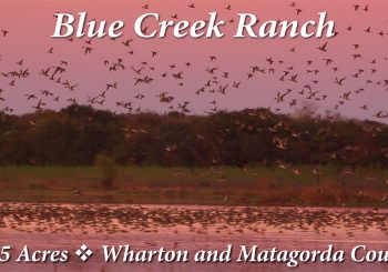 Blue Creek Ranch